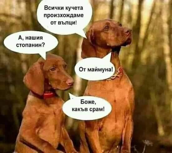 - Всички кучета произхождаме от вълци?!