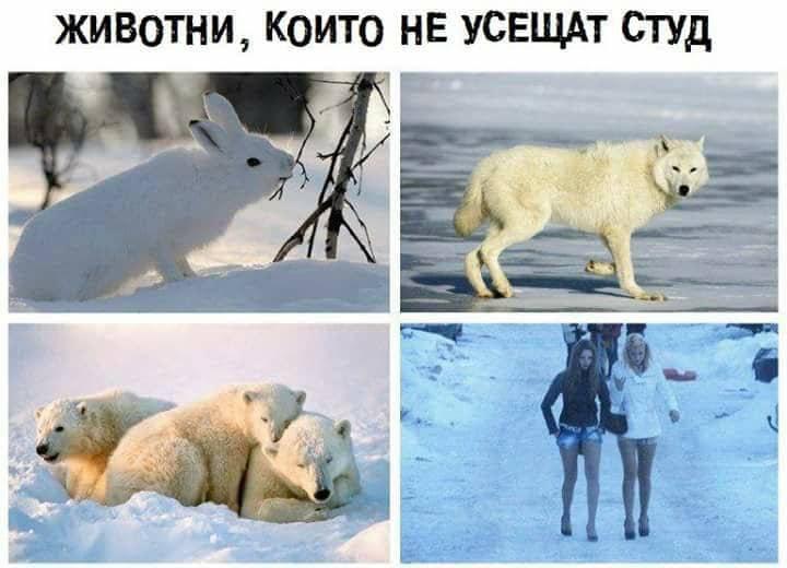 Животни, които не усещат студ