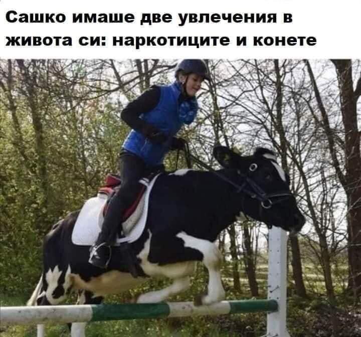 Сашко имаше две увлечения в живота си: наркотиците и конете