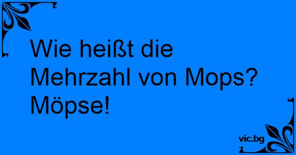 Wie heißt die Mehrzahl von Mops? Möpse!