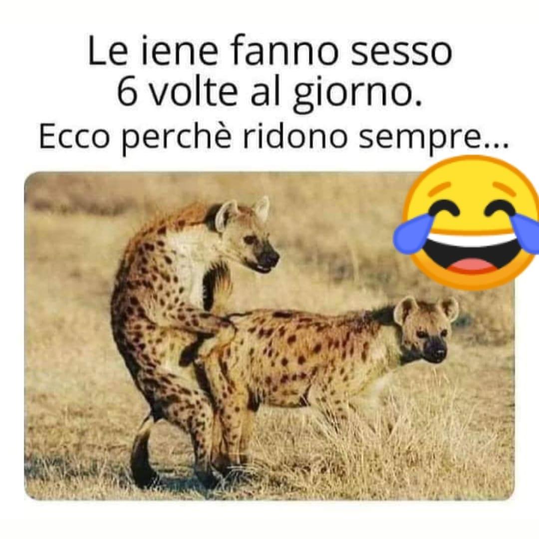 Le iene fanno sesso 6 volte al giorno. Ecco perché ridono sempre...