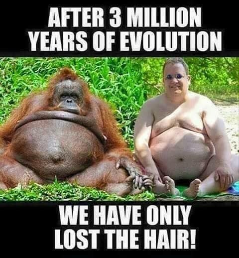 After 3 million years of evolution  We have only lost the hair