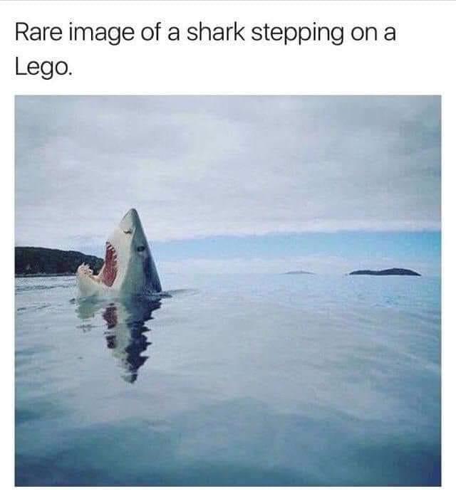Rare image of а shark stepping оп а Lego.