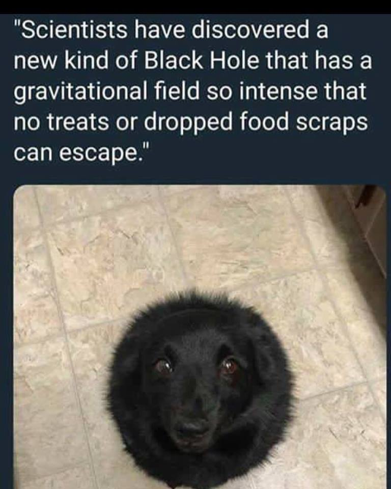 Scientiest have discovered a new kind of Black hole that has a gravitational field so intense that no treats or dropped food scraps ca escape